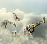 walk with one's head in the clouds